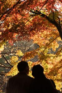Red Leaves Couple by Masahiro Hayata